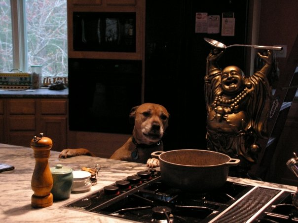 Punkin loved to be my Sous Chef and Taste Tester.
